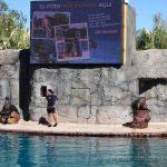 Exhibición de mamíferos marinos