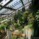 Invernadero de especies tropicales