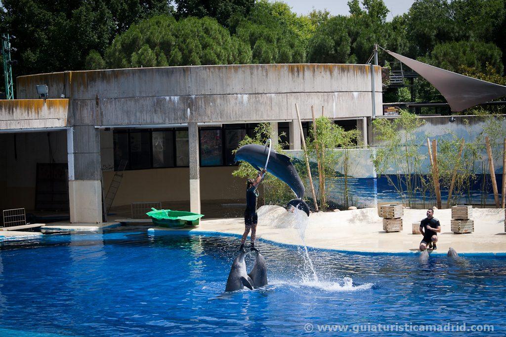 Exhibición de delfines